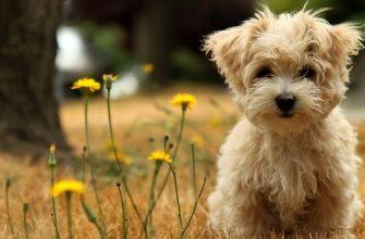 Снимаем портретное фото животных - собаки