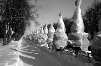 Фотографии Петергофа зимой