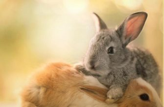 Милые животные - фото Essa Al Mazroee