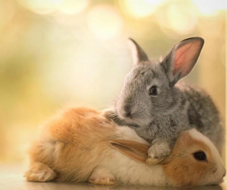Милые животные фото самое интересное