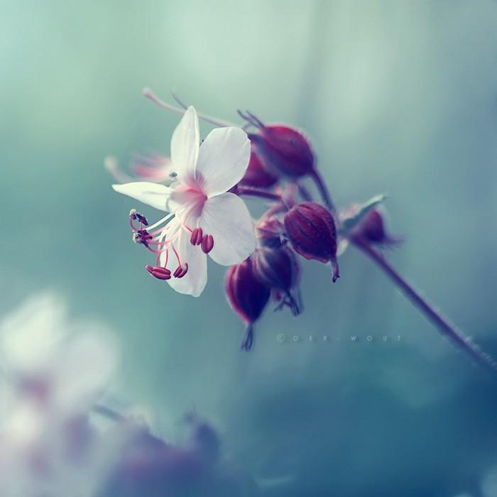 Нежные фото цветов от Oer-Wout