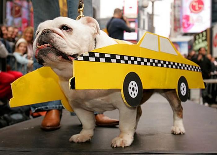 Интересные факты про такси