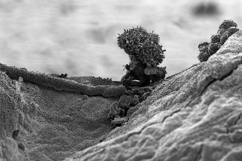 Наноарт фотографа Майкла Оливери