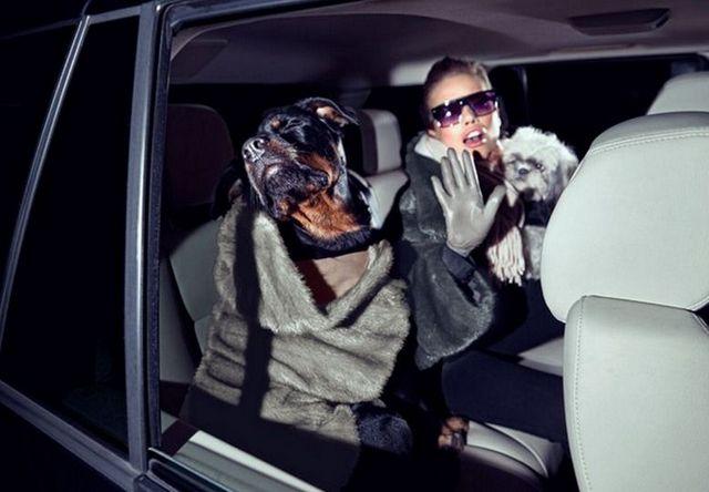 Красивая одежда для собак разных пород