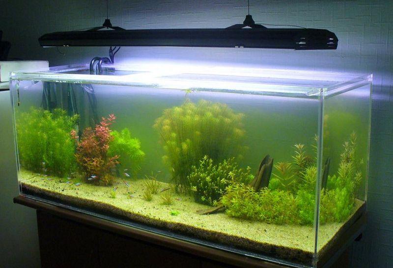 Рыбки в аквариуме и их польза