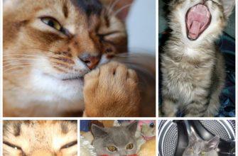Котоматрица - фотографии животных и приколы