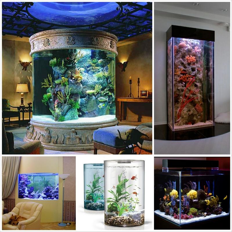 Домашний аквариум - уход и содержание