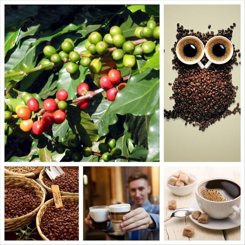 Кофейные зерна приносят здоровье, красоту и помогают в быту