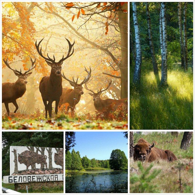 Национальный парк Беловежская пуща - достопримечательности Беларуси