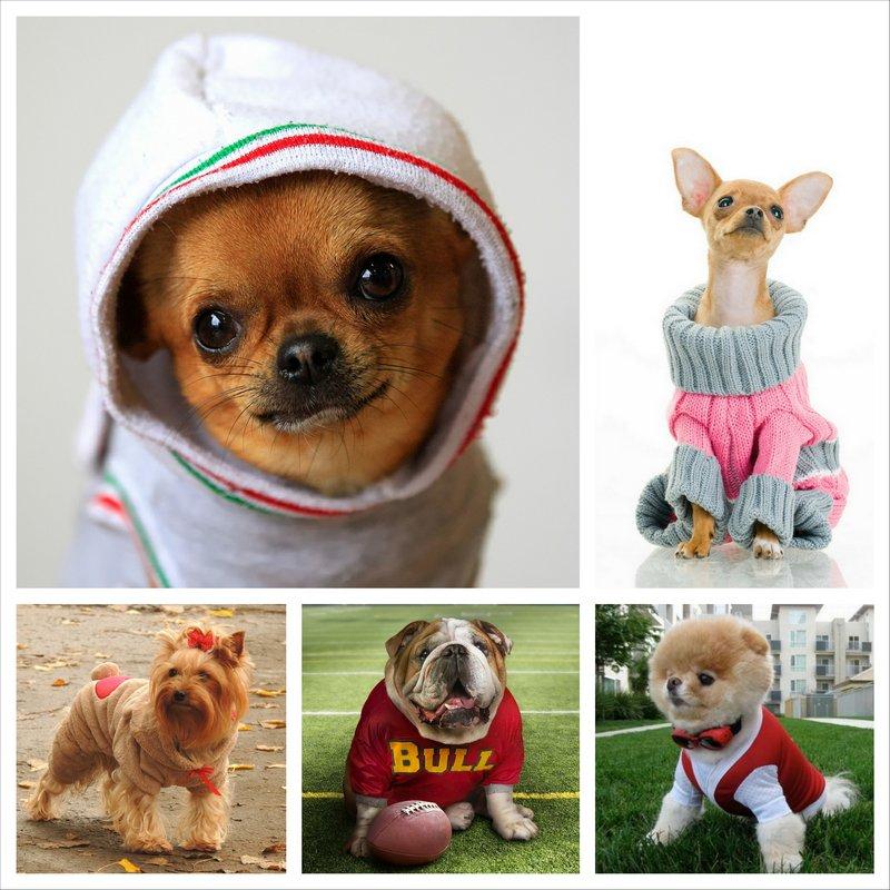 Одежда для маленьких собачек от магазина SmallPet