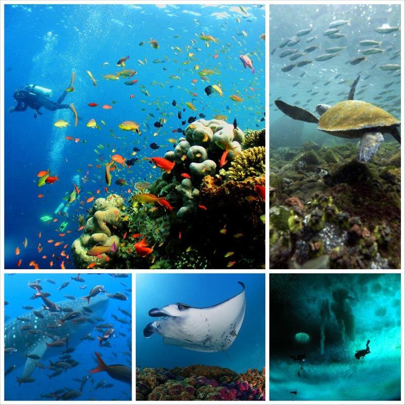 Самые красивые места на планете – подводная съёмка Галапагосских островов, Сипадан, Антарктика, Сокорро, Раджа Ампат и Филиппины