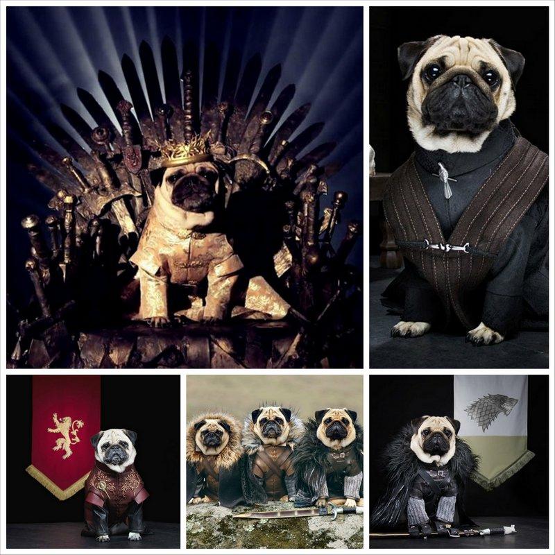 Мопсы - косплей на тему сериала Игра престолов