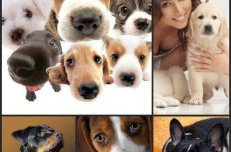 Разные породы собак - проблема выбора