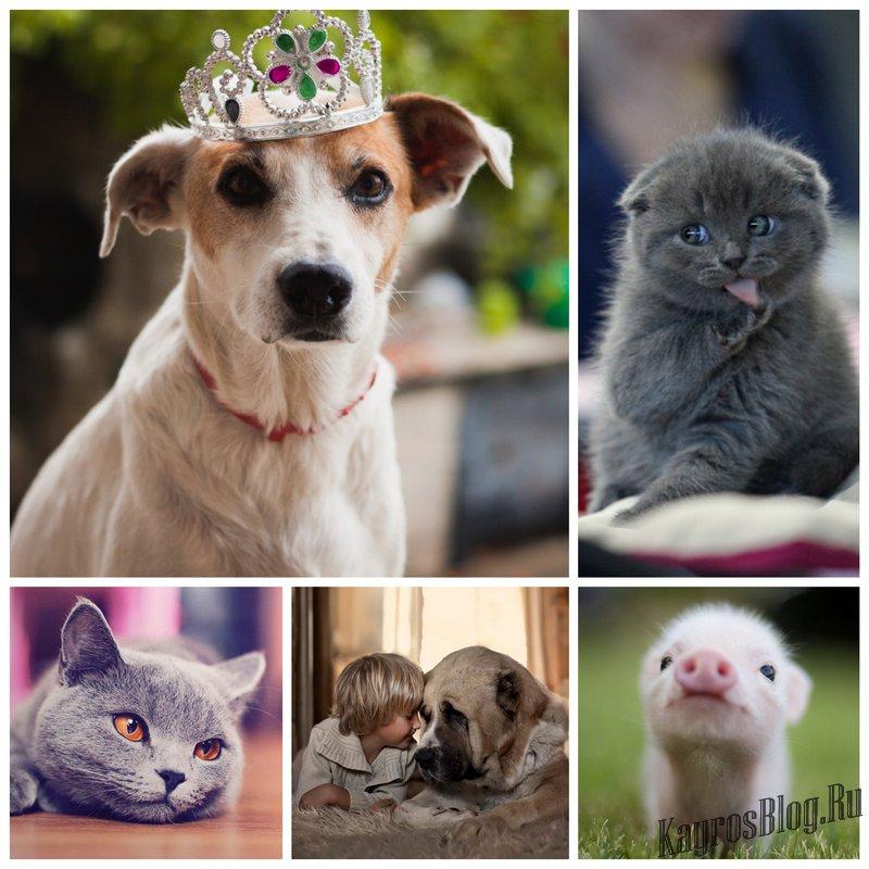 Фотографии домашних животных – советы и рекомендации