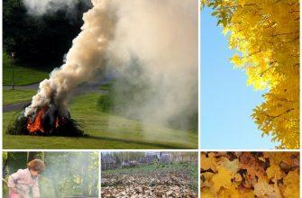 Сжигание листьев - сезонная проблема и её решение
