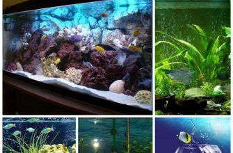 Живая вода в аквариуме - история новичка
