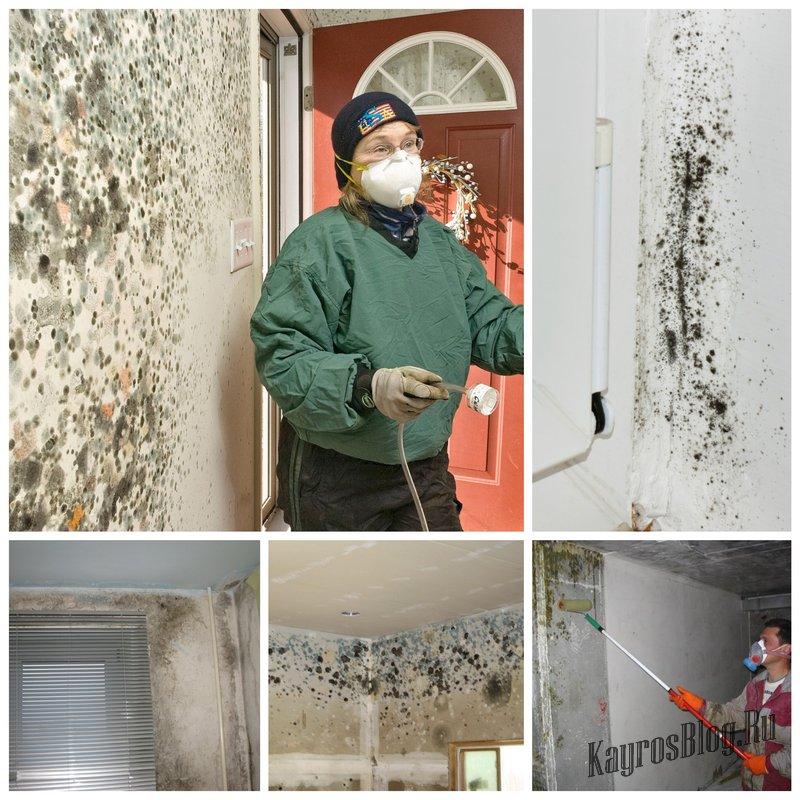 Уничтожение плесени в доме - важная задача