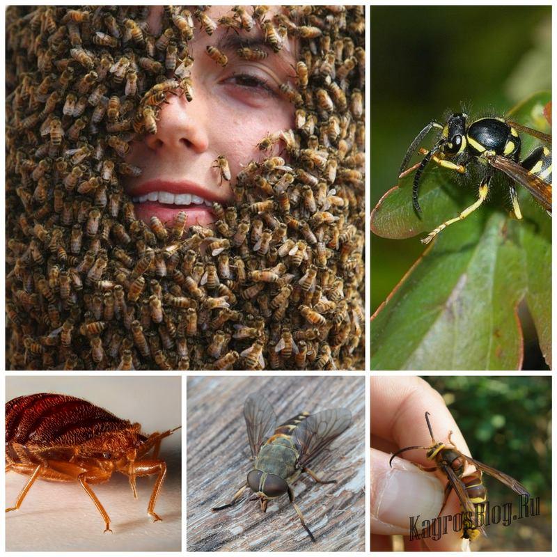 Осторожно – насекомые! Советы для туристов