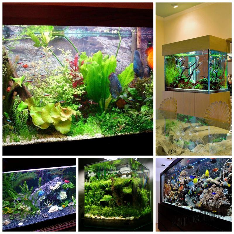 Выбор аквариума и его правильное оснащение
