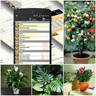 Опытные цветоводы прилагают массу усилий, чтобы растения безупречно выглядели, отлично себя чувствовали, цвели и радовали своей красотой.
