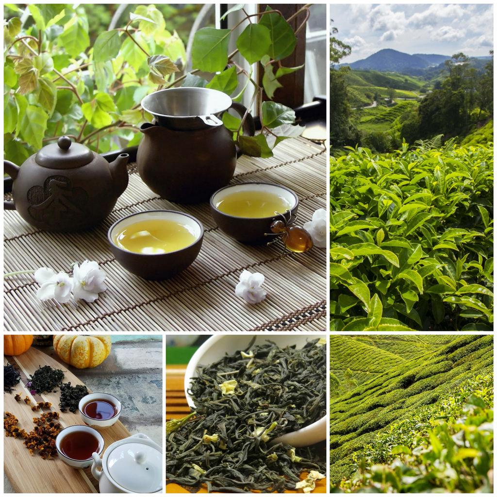 Зеленый чай – «дело тонкое»