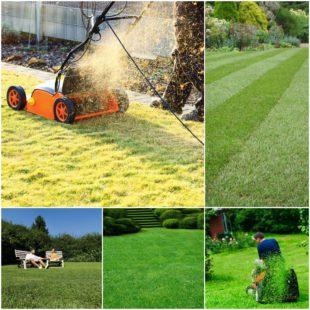 Зачем мульчировать газон - ландшафтный дизайн у вашего дома