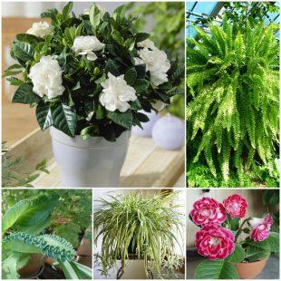 Растения в детской комнате - гид потребителя