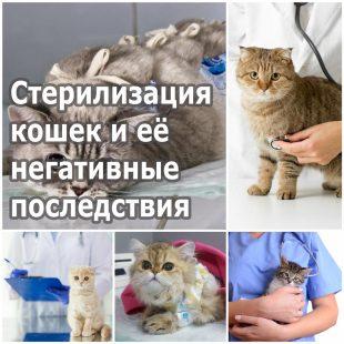 Стерилизация кошек и её негативные последствия