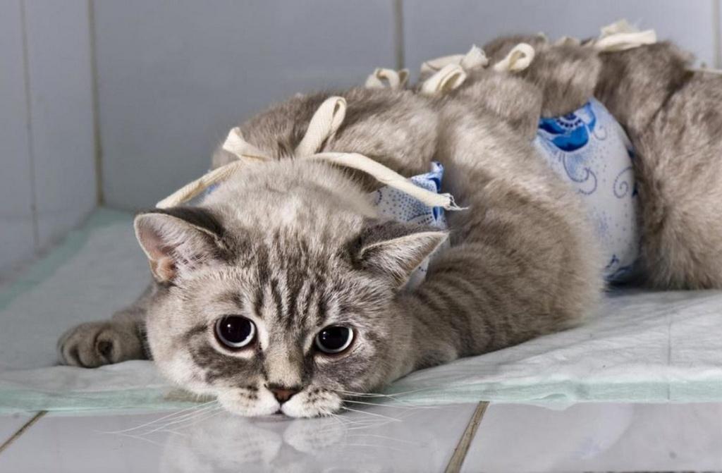 Стерилизация кошки - отзыв хозяев