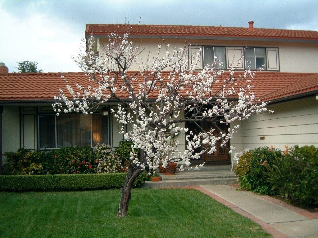 Посадка абрикосовых деревьев