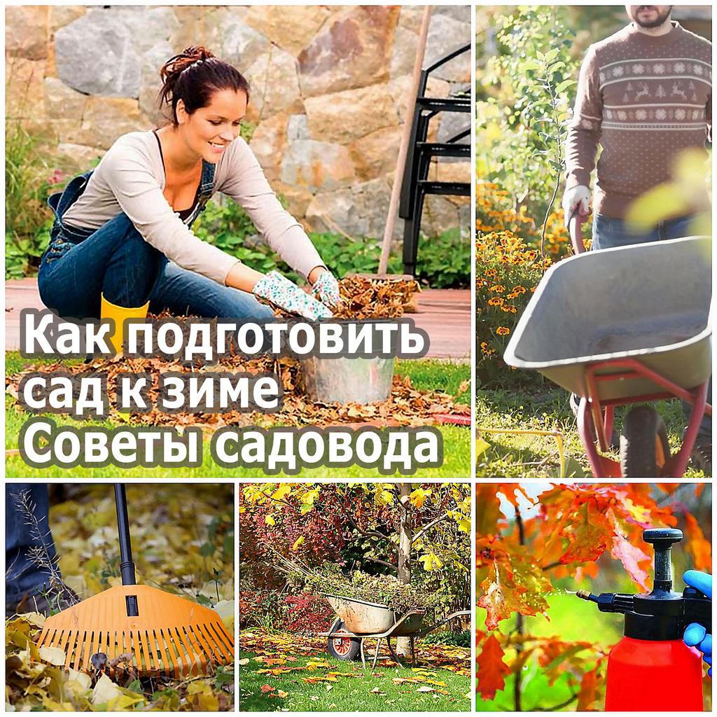 Как подготовить сад к зиме - советы садовода