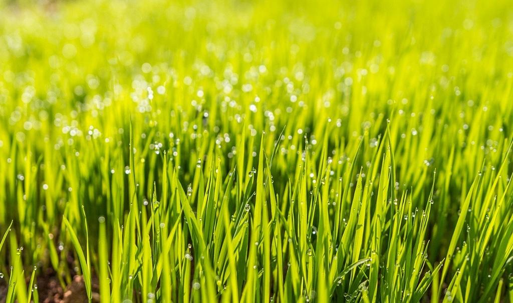 Орошение и внесение удобрений