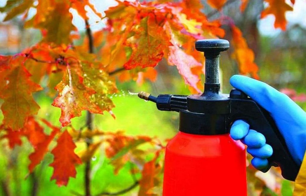 Основные сентябрьские работы в саду
