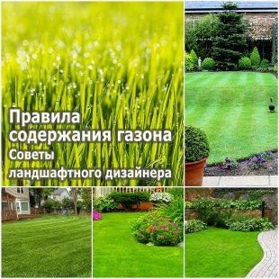 Правила содержания газона - советы ландшафтного дизайнера