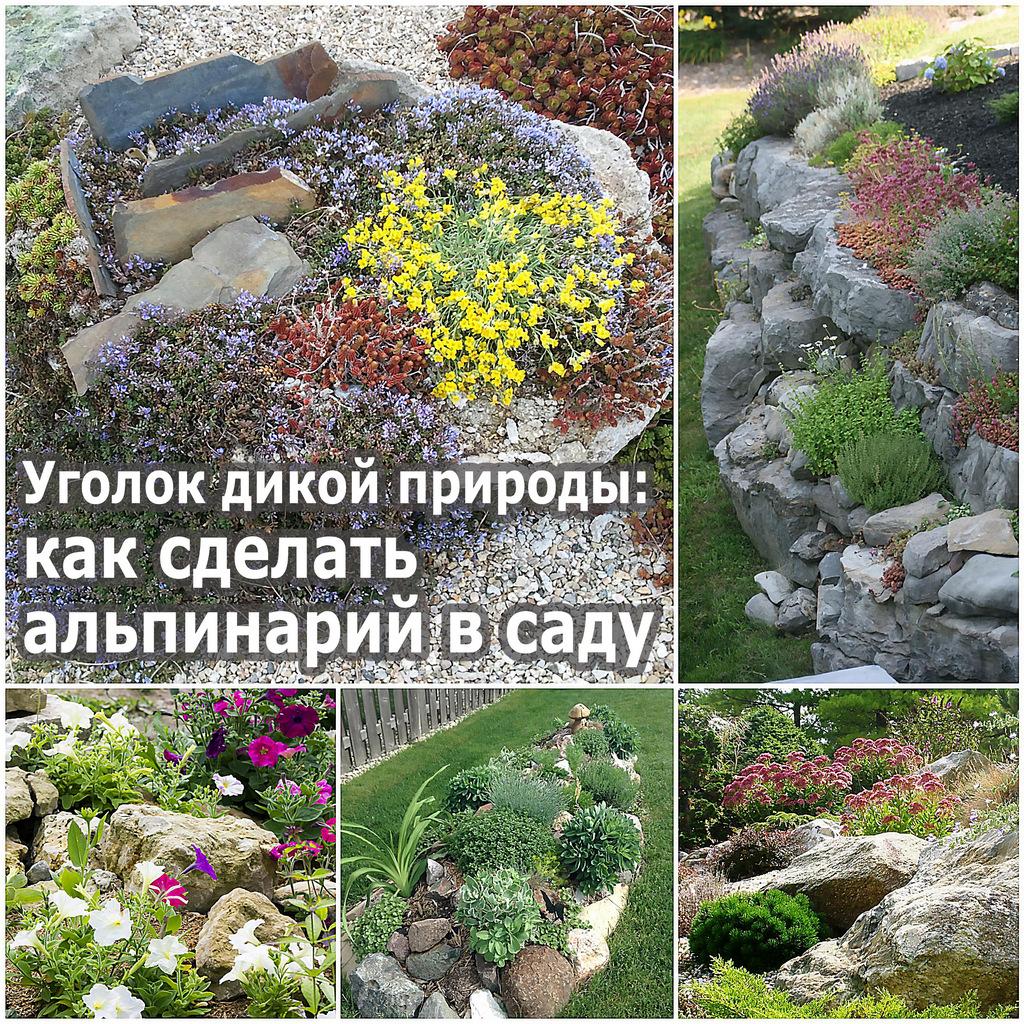 Уголок дикой природы как сделать альпинарий в саду