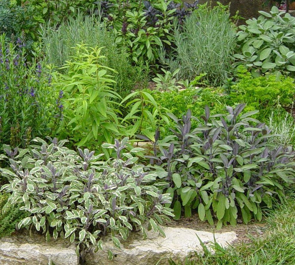 Преимущества травянистого сада
