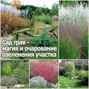 Сад трав - магия и очарование озеленения участка