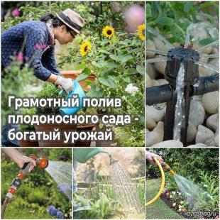 Грамотный полив плодоносного сада - богатый урожай