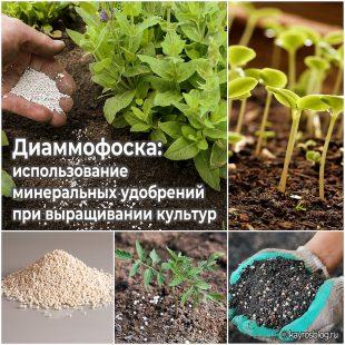 Диаммофоска использование минеральных удобрений при выращивании культур