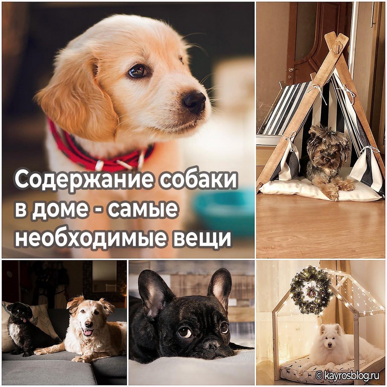 Содержание собаки в доме - самые необходимые вещи