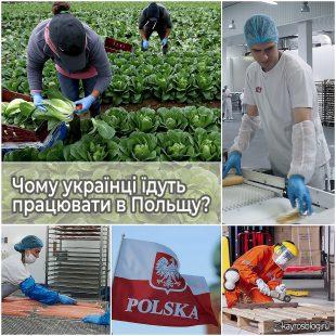 Чому українці їдуть працювати в Польщу