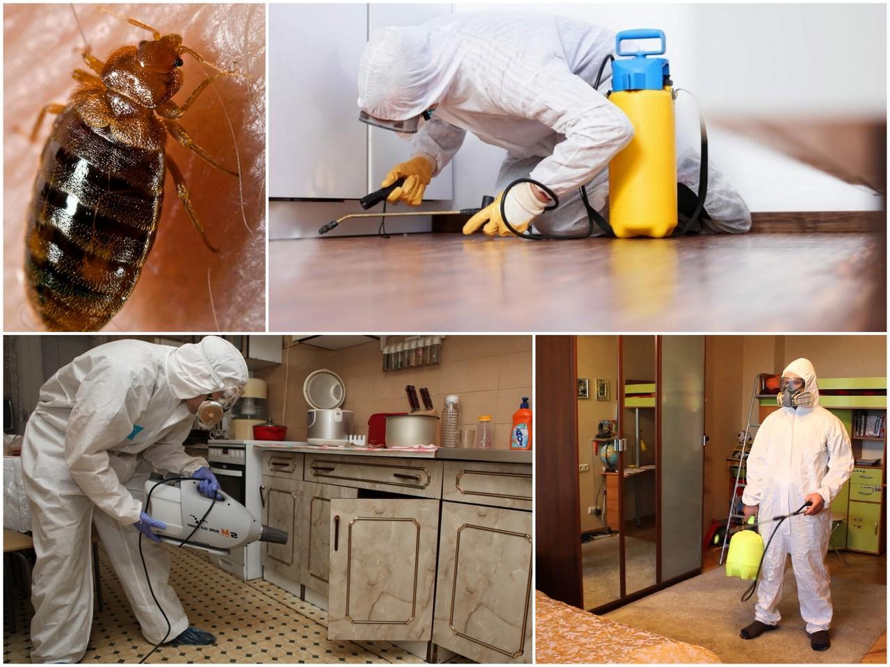 Уничтожение постельных клопов в домашних условиях