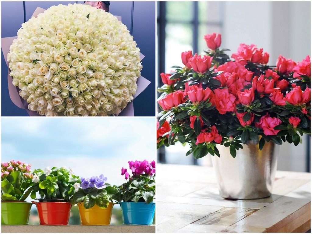 Цветы для Козерога (22.12 - 20.01)