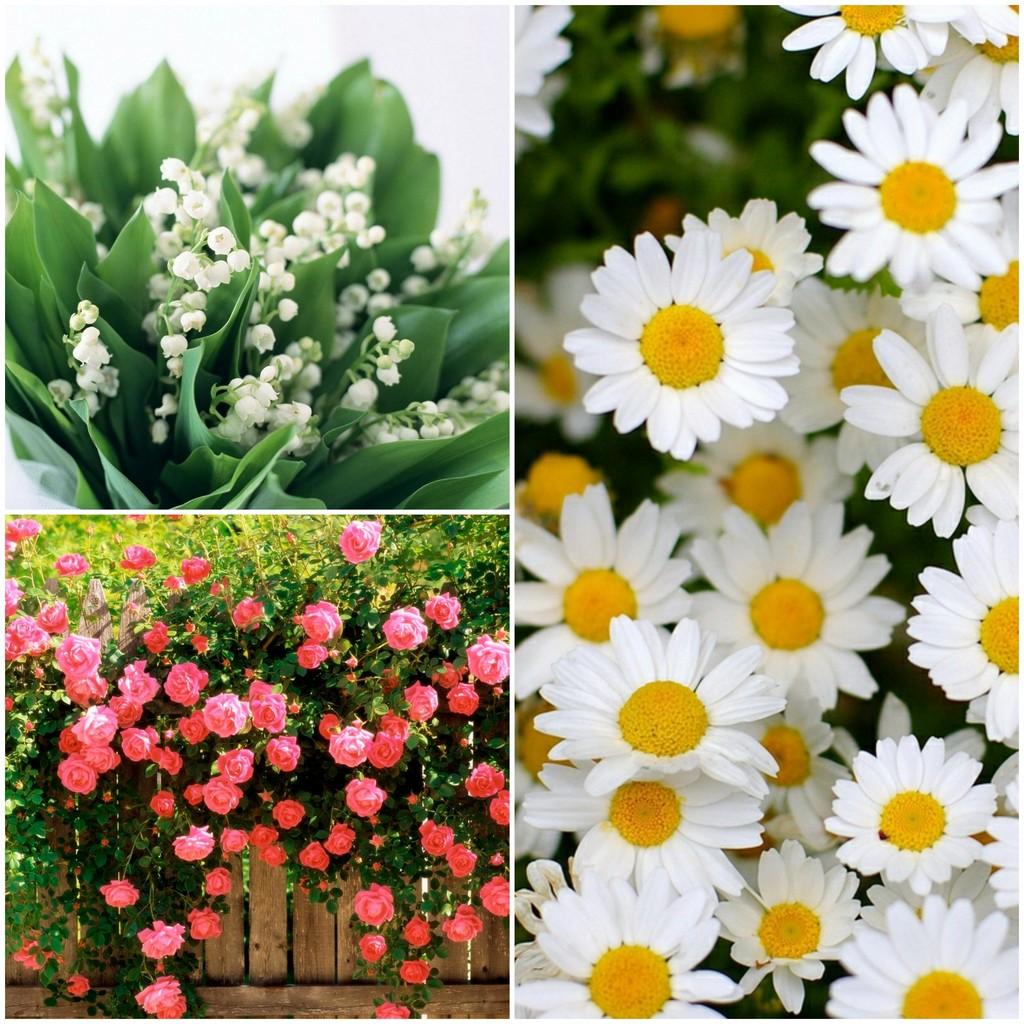 Цветы апреля, мая и июня