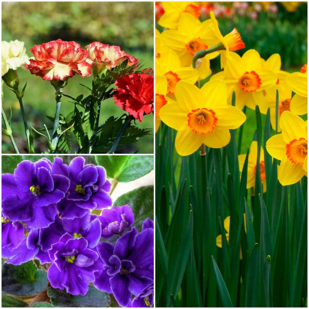 Цветы для января, февраля и марта