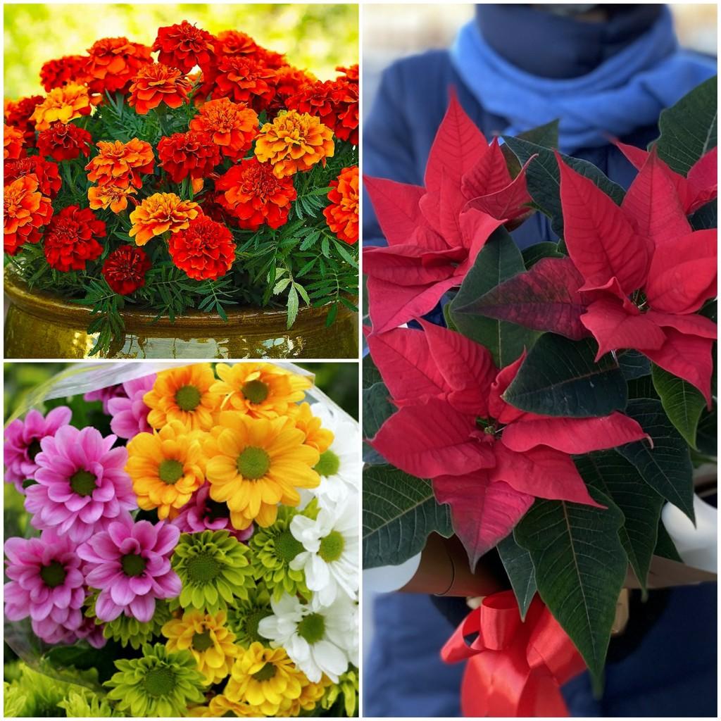 Цветы на день рождения в октябре, ноябре и декабре