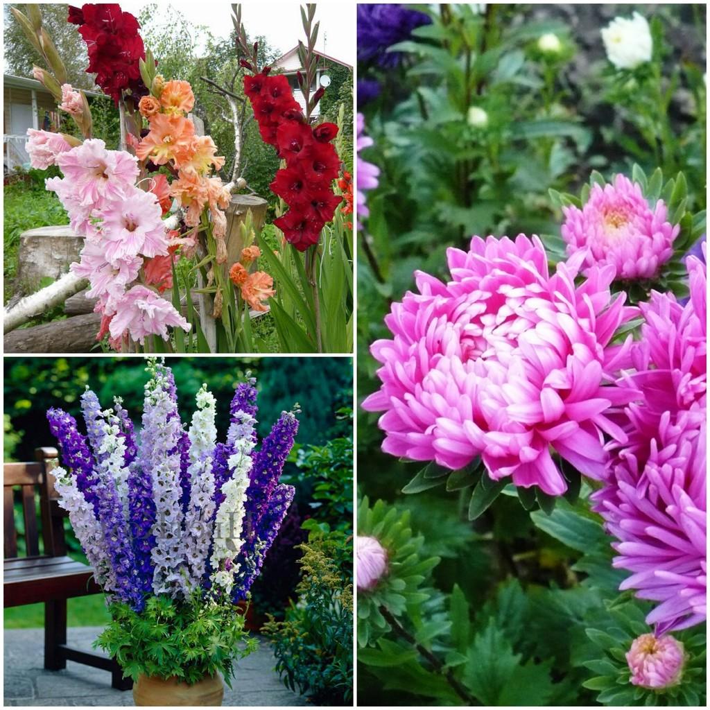 Цветы в июле, августе и сентябре